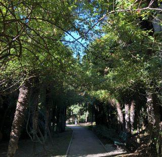 L'Arboreto di Arco